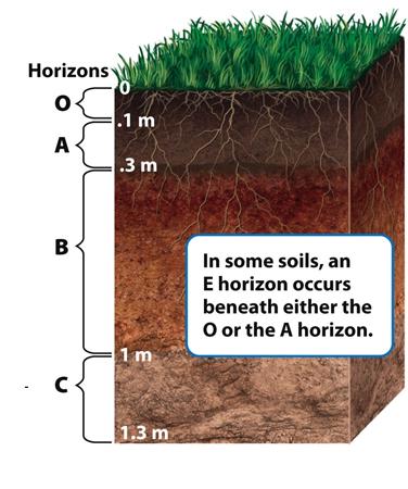 Sierra john ap envsci class notes for Earth soil layers